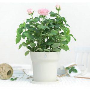 Xiaomi Flora Smart Flower Pot