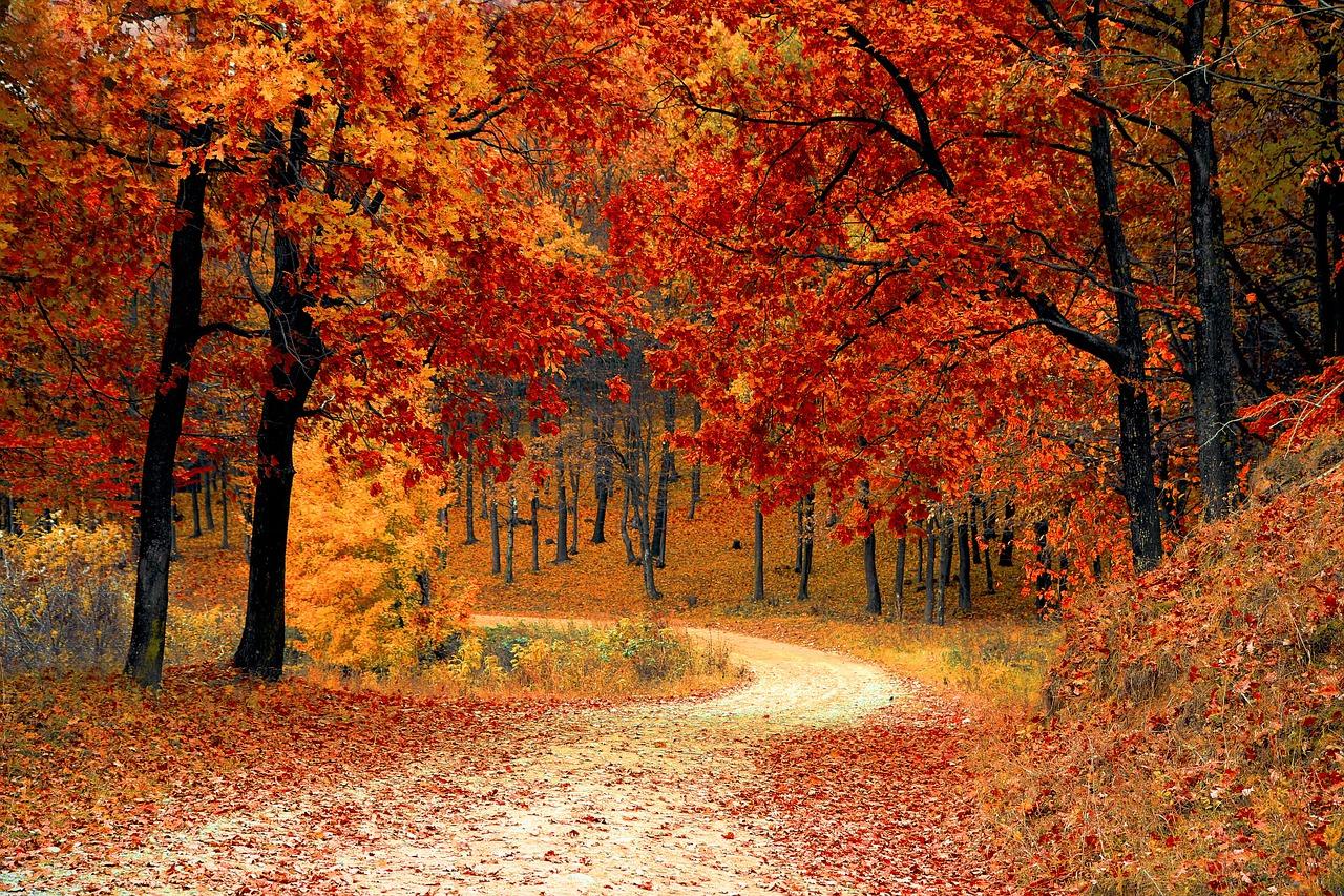 őszi rollerajánlatok